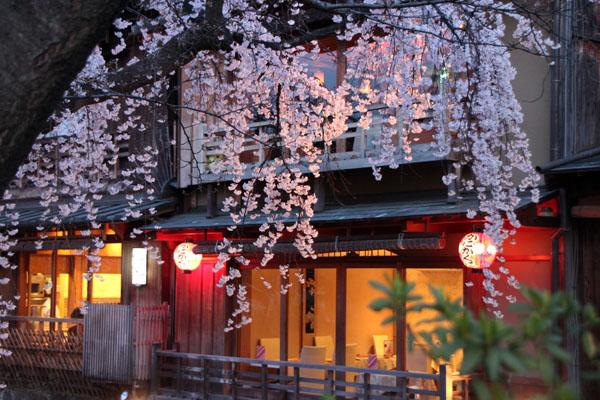 14桜始まる3 祇園白川_e0048413_21453322.jpg