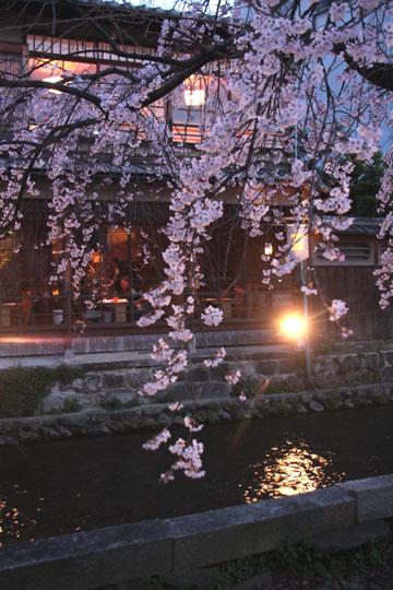 14桜始まる3 祇園白川_e0048413_21454938.jpg