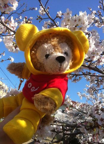 GACKTを聞きながら お花見散歩!_c0036138_15514269.jpg