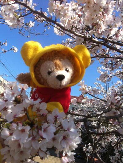 GACKTを聞きながら お花見散歩!_c0036138_15545974.jpg