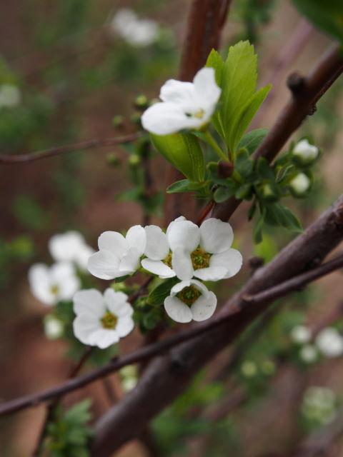 雪咲く春_a0257652_742516.jpg