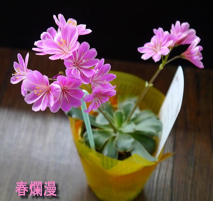 きっと春爛漫_f0178858_11545463.jpg