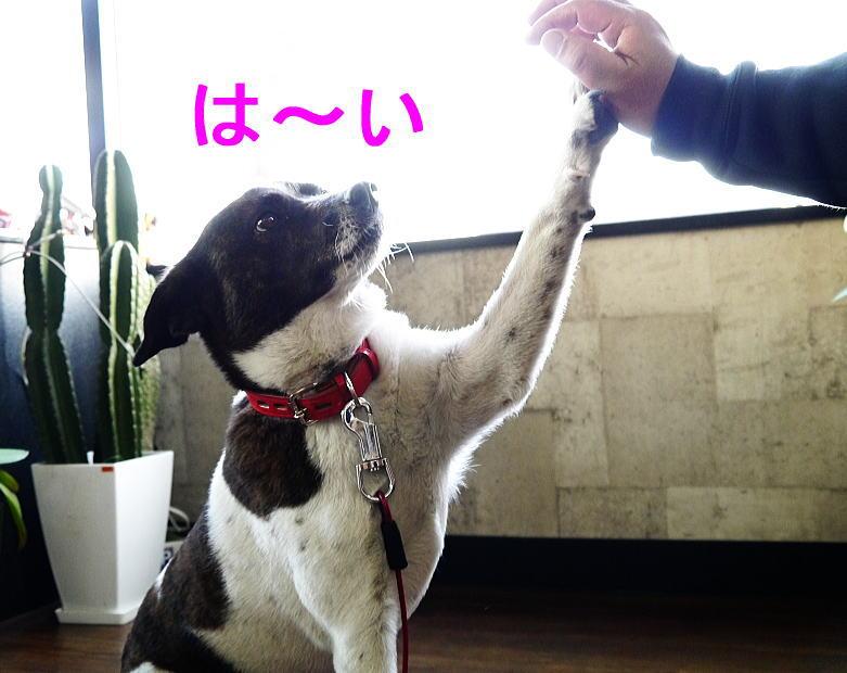 4/27 モタサン★エントリー開始!!_f0178858_20285536.jpg