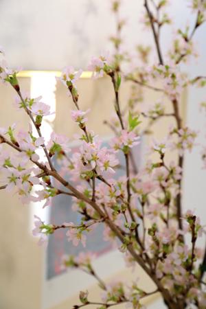 我が家の春_f0185066_18391197.jpg