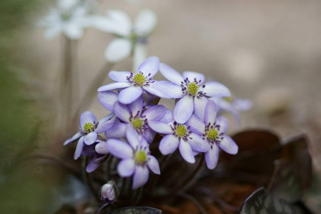 自宅の花 ②_b0223668_8204661.jpg