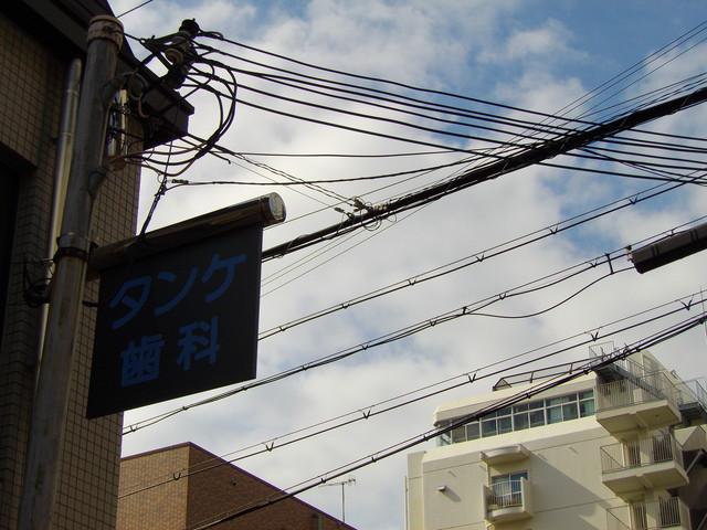 タンケシカ_c0001670_23591582.jpg