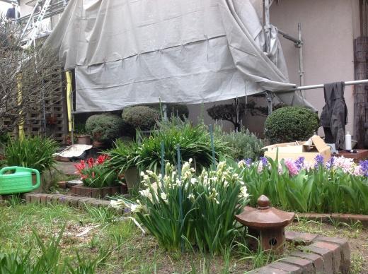 桜の花が咲き始めましたね。_f0052181_12391865.jpg
