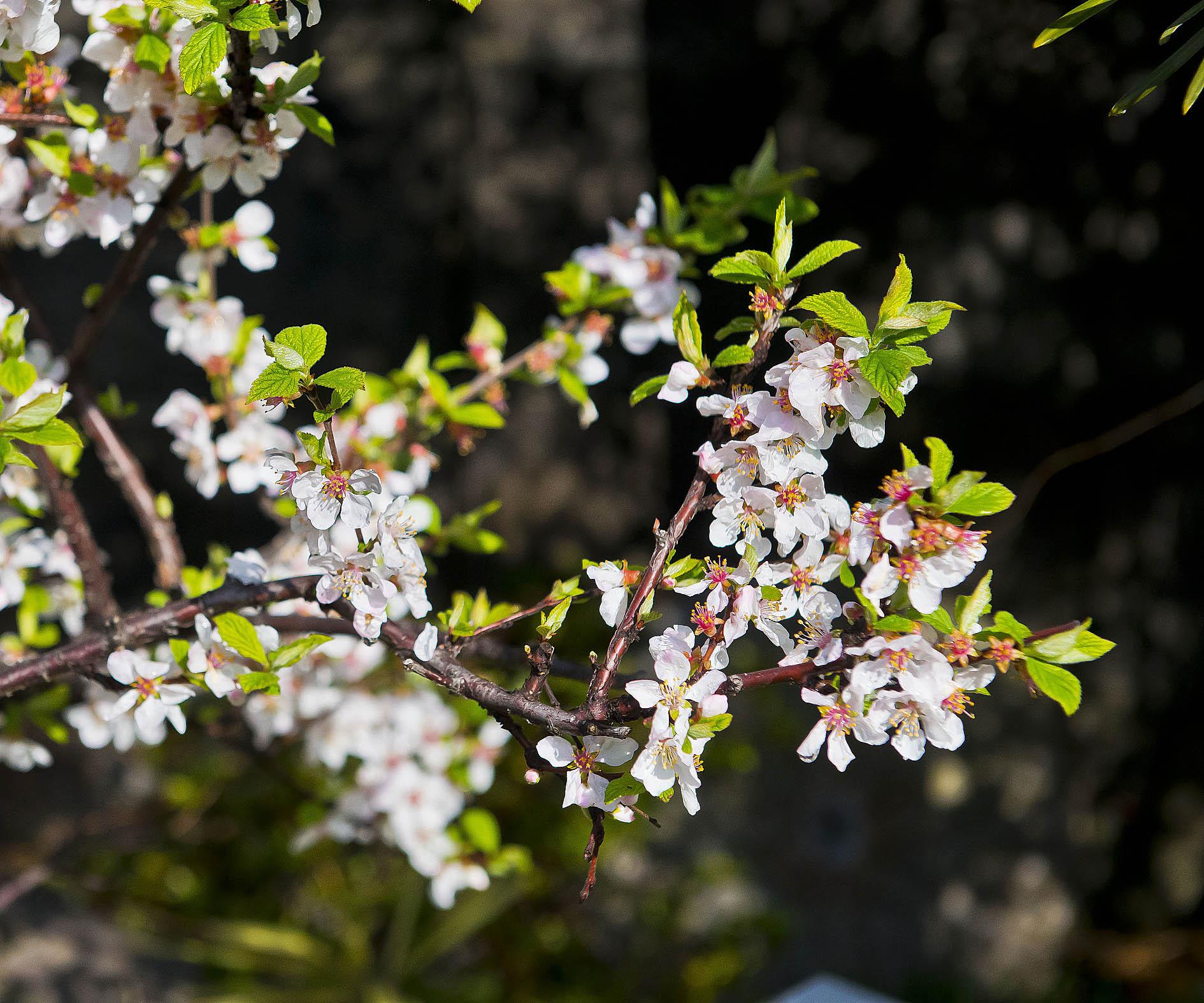 春が来ました。_f0245594_924043.jpg