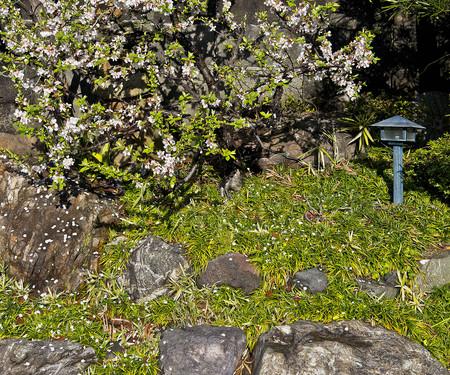 春が来ました。_f0245594_9242958.jpg