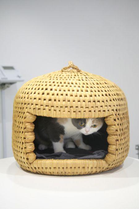 猫ちぐら in クリキャリ_c0108595_1335448.jpg