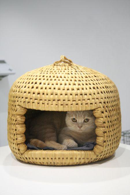 猫ちぐら in クリキャリ_c0108595_13355551.jpg