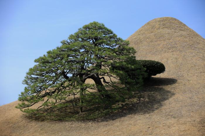 水前寺成趣園の富士山_e0135098_228539.jpg