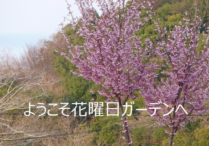 d0172010_19433855.jpg