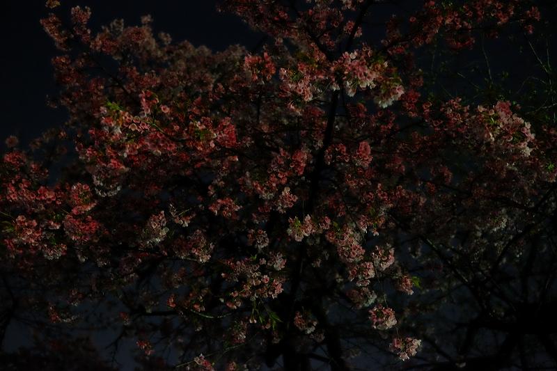 桜一番の夜にはUFOを呼ぶ方法?_f0050534_23090398.jpg