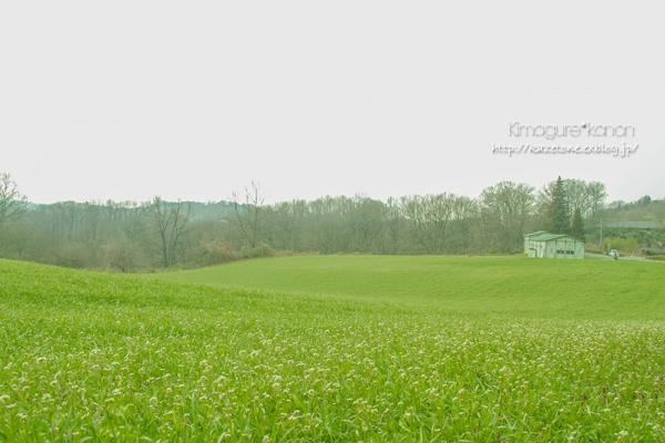 高原に、春風 吹く.。o○_b0197639_21404352.jpg