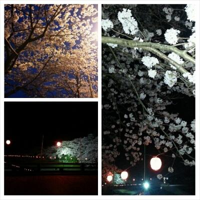 夜桜_c0172049_23342855.jpg