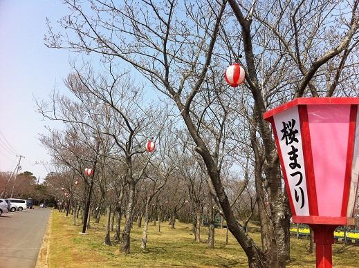 桜まつりイベント詳細!!_f0229750_16555582.jpg