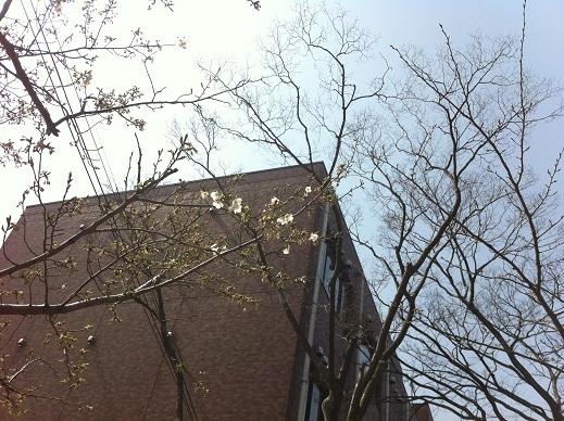 桜まつりイベント詳細!!_f0229750_16565220.jpg