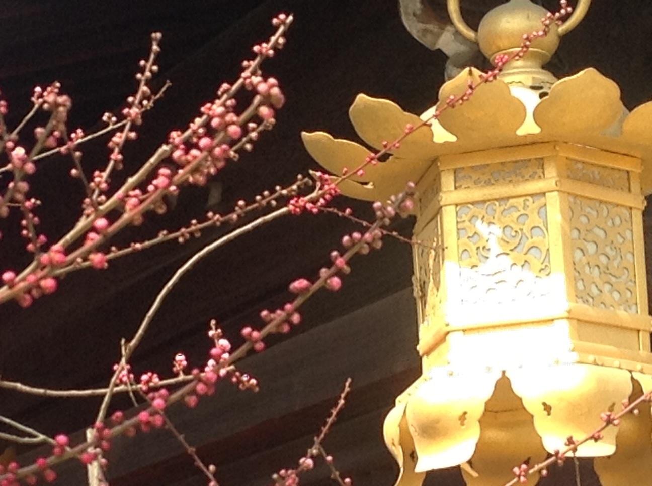 京都の梅_d0237757_00383422.jpg