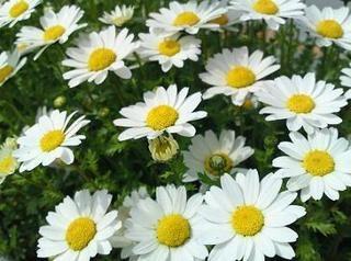 花伝の春_d0237757_18000798.jpg