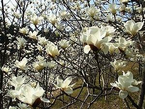 花伝の春_d0237757_18002596.jpg