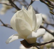 花伝の春_d0237757_18003383.jpg