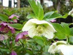 花伝の春_d0237757_18004376.jpg