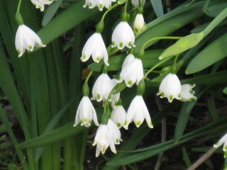 花伝の春_d0237757_18005252.jpg