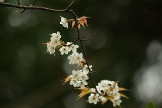 花伝の春_d0237757_18010668.jpg