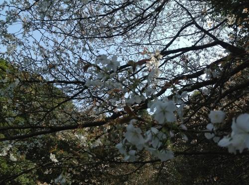 花伝の春_d0237757_18022845.jpg