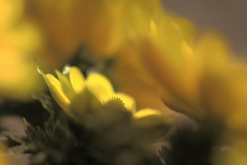 春模様(2014.03.28)_e0183063_15471693.jpg