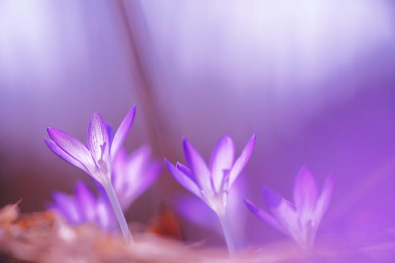 春模様(2014.03.28)_e0183063_15473025.jpg