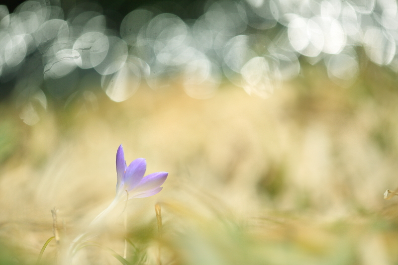 春模様(2014.03.28)_e0183063_15475255.jpg