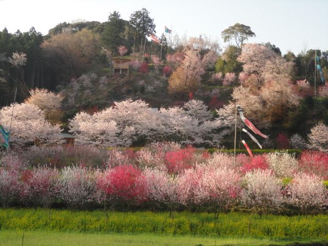 ムーの近所 山の花見_f0000163_9355674.jpg