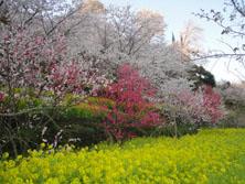 ムーの近所 山の花見_f0000163_9513333.jpg
