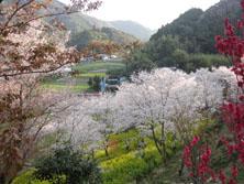 ムーの近所 山の花見_f0000163_9521411.jpg