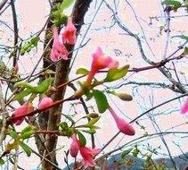 続・遊びの山にも春が溢れ出す ・・・_b0102572_1029086.jpg