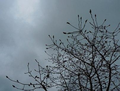 続・遊びの山にも春が溢れ出す ・・・_b0102572_10464345.jpg