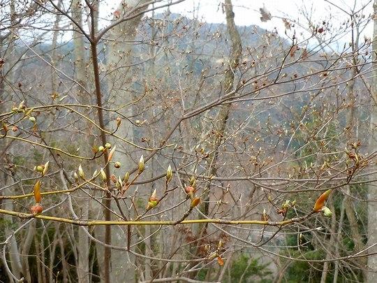 続・遊びの山にも春が溢れ出す ・・・_b0102572_9555180.jpg