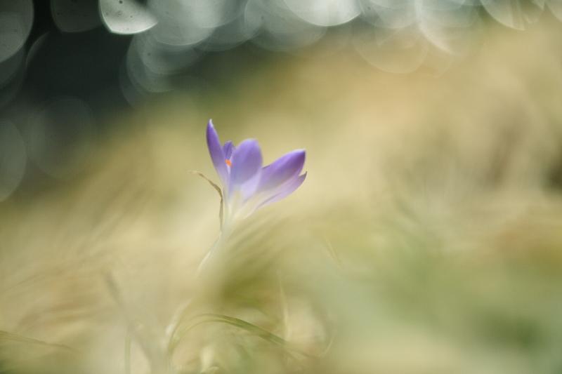 春模様(2014.03.28)_f0075075_14302647.jpg