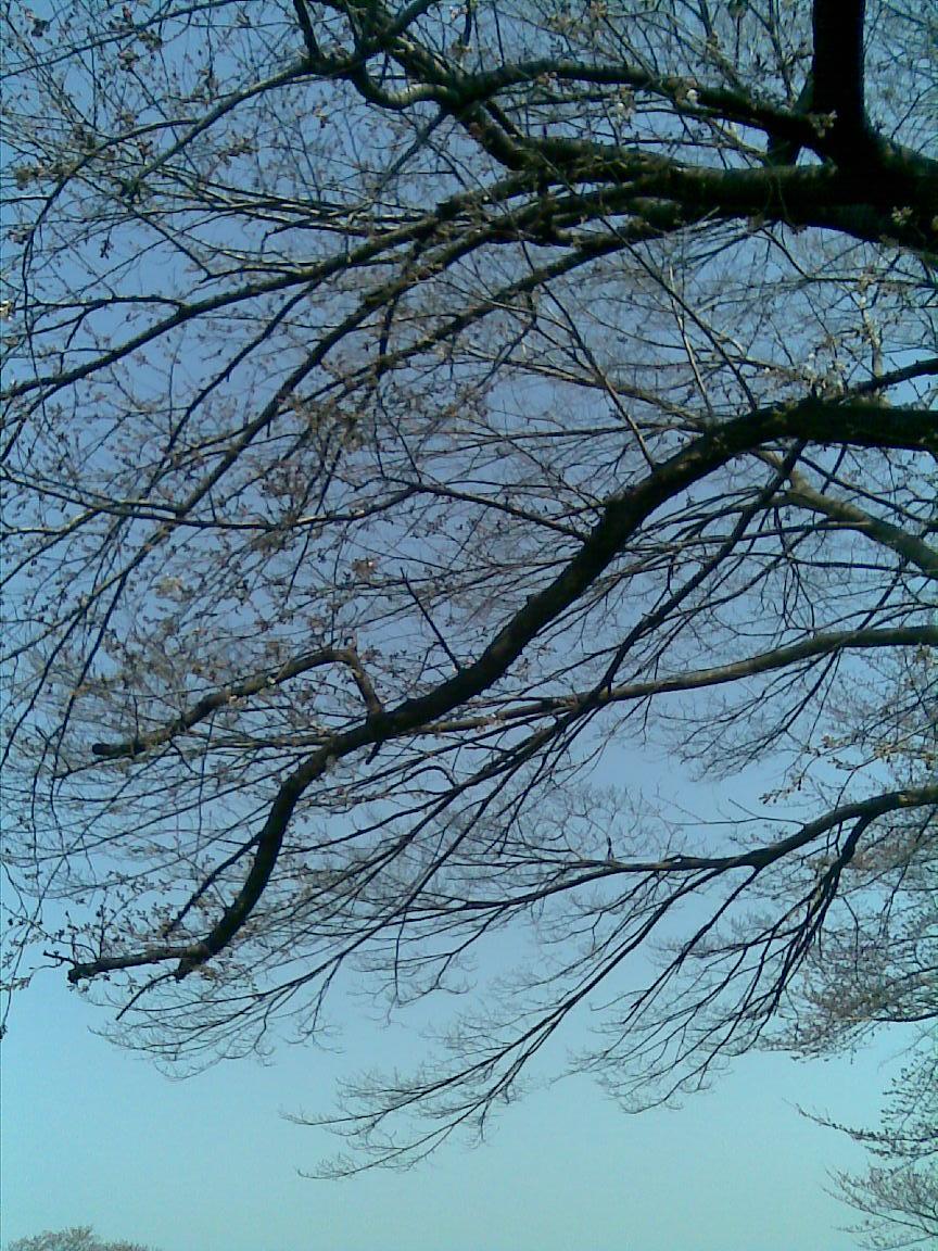 d0061678_201191.jpg