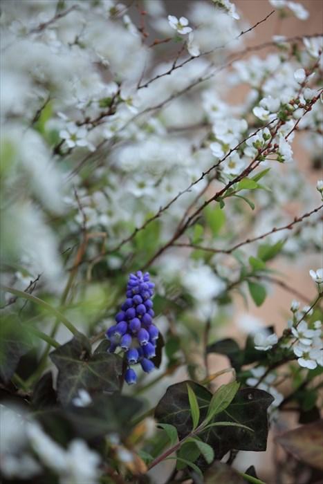 春が来た!_e0305388_818879.jpg