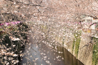 今日の目黒川 (3/28)_f0230689_11451658.jpg