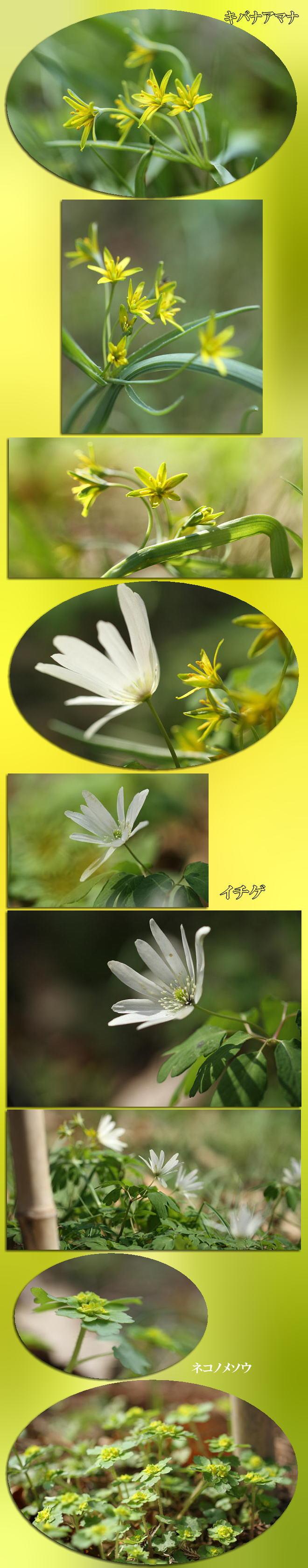 f0164592_2042273.jpg