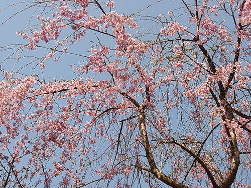 春爛漫♪_b0105897_2362576.jpg