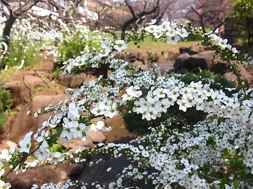 春爛漫♪_b0105897_2374663.jpg