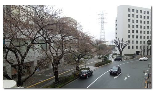 小石川後楽園の桜_c0051105_1114043.jpg