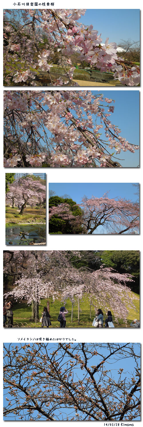 小石川後楽園の桜_c0051105_133599.jpg