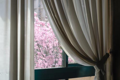 朝の散歩と綺麗な桜!_b0194208_2323963.jpg