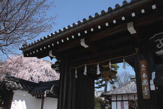 14桜始まる4  本満寺_e0048413_043199.jpg